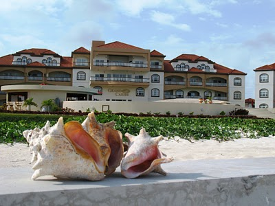 conch shell pictures