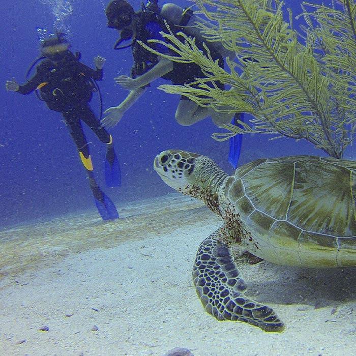 Belize Adventure Tours - Diving