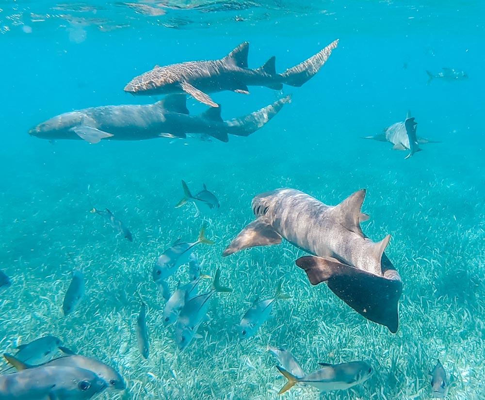 Belize Diving Tours | Scuba Diving in San Pedro Ambergris Caye