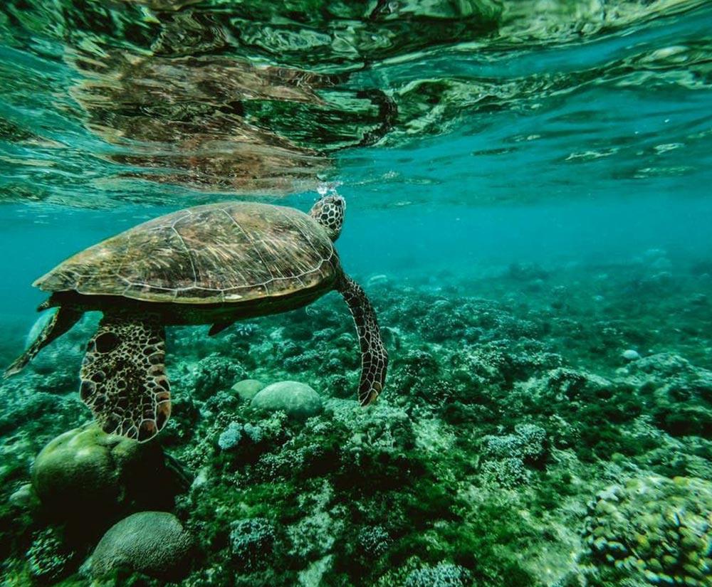Belize Snorkeling Tours - Bacalar