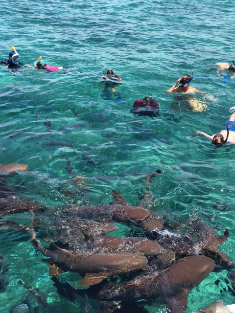 Snorkeling in Belize - Samantha Zweben
