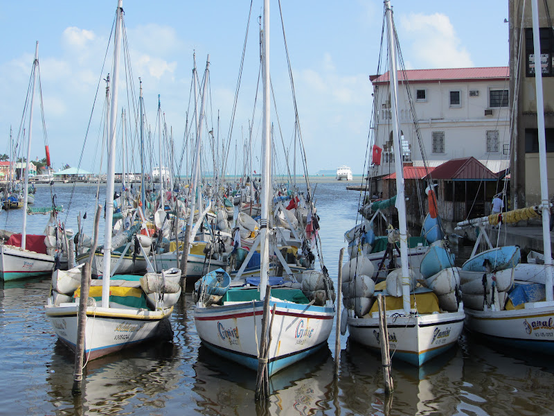 Some of Belize's Lobster Fleet readying for the season.