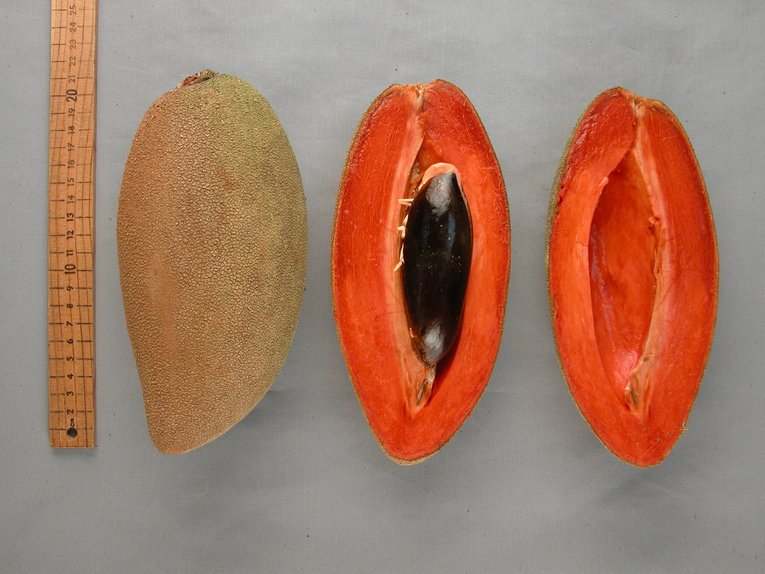 how to say mamey in english