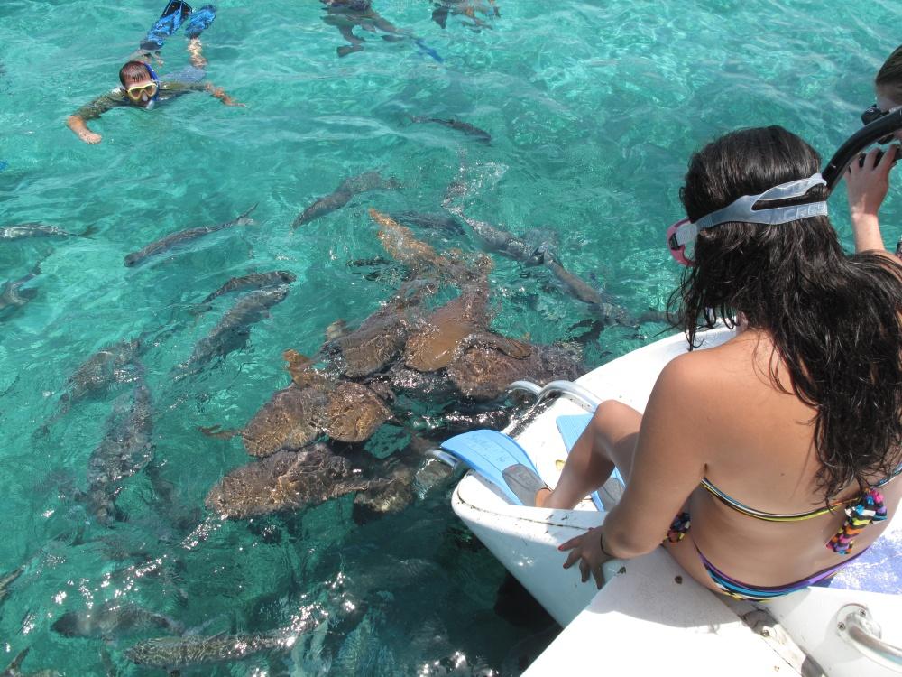 snorkel sharks